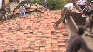 Leopard Charges at Rescue Workers in Central India