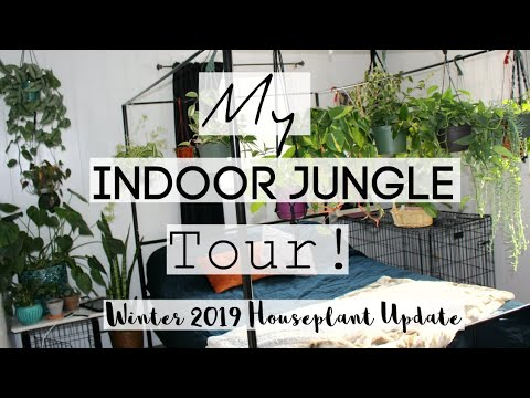 Houseplant Tour | Winter 2019 Houseplant Jungle Tour!