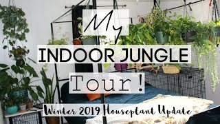 Houseplant Tour | Winter 2019 Houseplant Jungle Tour!