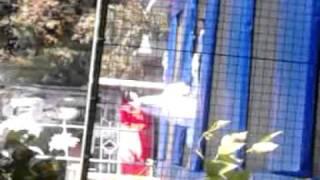 Bride jumps on luna park