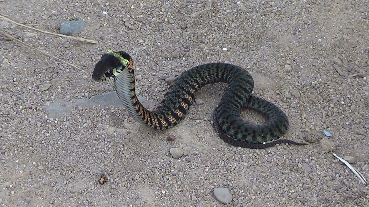 фото змей обитающих на дальнем востоке почему люди