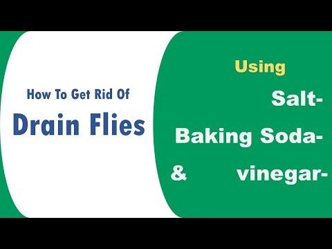 Ways to get rid of drain flies naturally