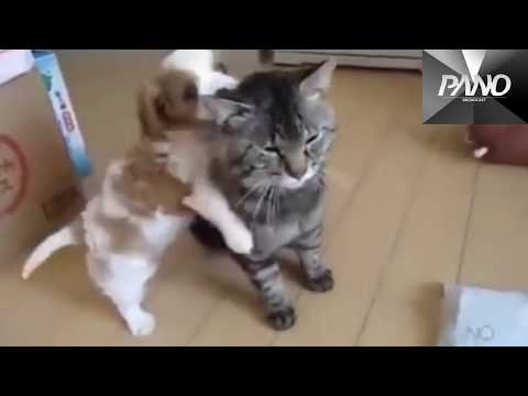 3 REALLY FUNNY CATS DOGS will make you LAUGH