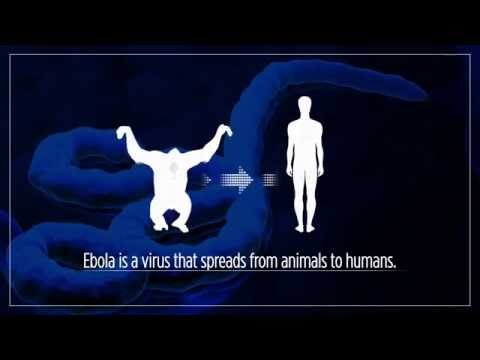 Ebola Outbreak In West Africa - Explained