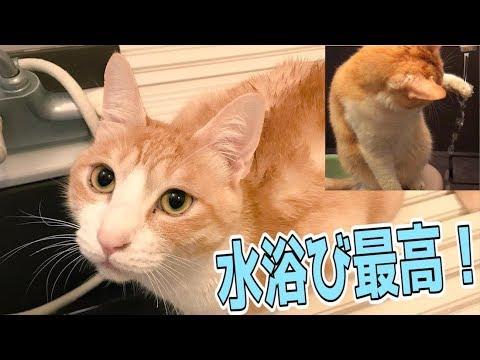 猫がお風呂で水浴びを始めてびしょびしょになったwww