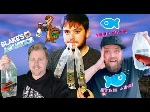 Buying Fish Online Vs. Fish Store (LIVE!!!)