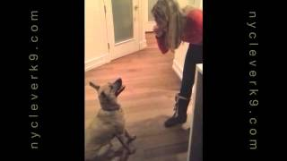 Command To Calm Aggressive Or Anxious Dogs Instantly!ny Clever K9 Christina Shusterich