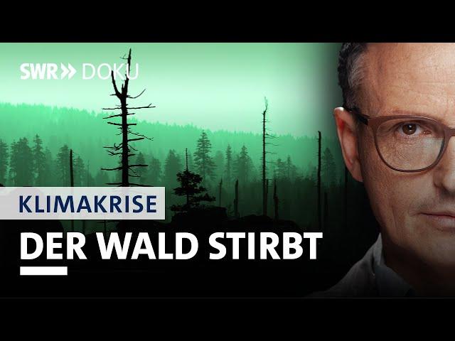 Das Baumsterben – Der Wald von morgen | Axel Wagner und die Klimakrise (4/5) | SWR Doku