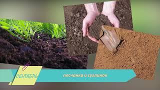 Осенняя клубника – к весеннему столу! Как высадить озимый сорт и получить щедрый урожай