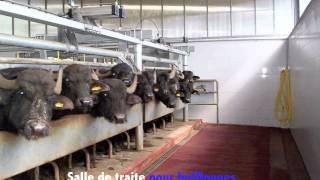Milkline Préséntation produits pour la traite et gestion du troupeau