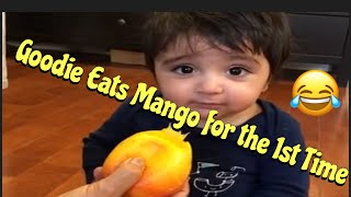Goodie eats mango for the first time!!