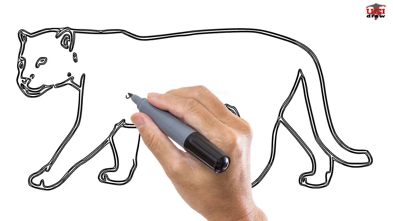 how to draw a jaguar easy step by step drawing tutorials for kids ucidraw