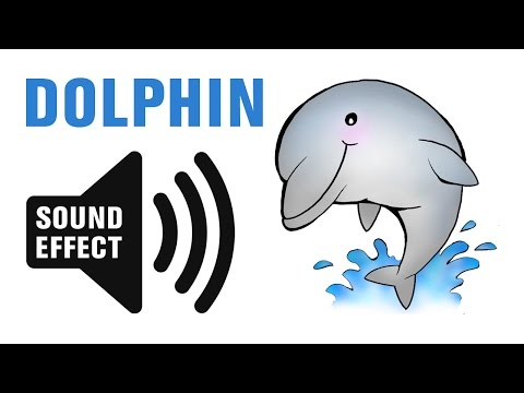 Dolphin Sound Effect - Whistles