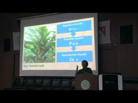 ISNSF16 - Corn Production in Nutrient Cycle - Eun-ja Kim