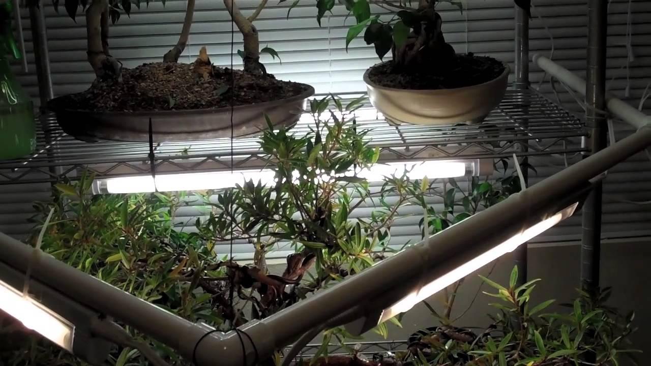 Indoor Bonsai Lighting Setup And Tool