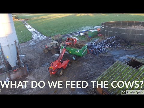 WHAT DO WE FEED OUR COWS IN THE WINTER?