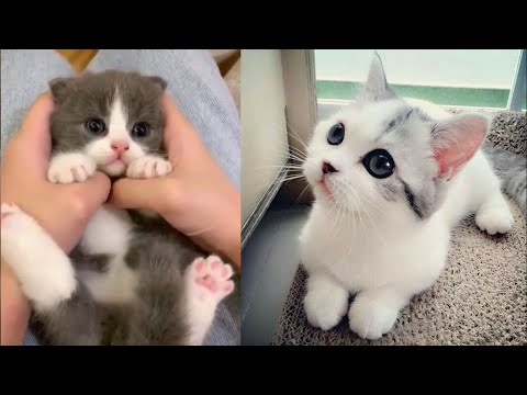 Baby Cats - Funny and Cute Baby Cat Videos Compilation (2019)