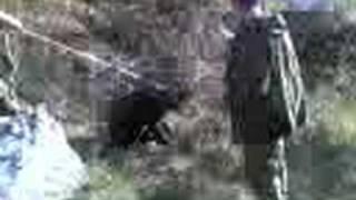 lov na diva svinja vo globocica struga 1