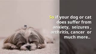 Does your cat or dog have anxiety?