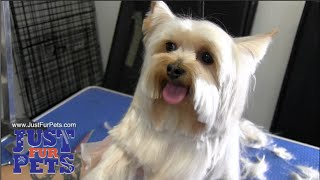 Doggy Grooming Northern Virginia Doggy Day cares-Just Fur Pets-703-455-3333