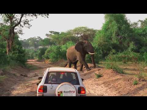 MURCHISON FALLS NATIONAL PARK / TRIP TO UGANDA DAY 4 / 2018