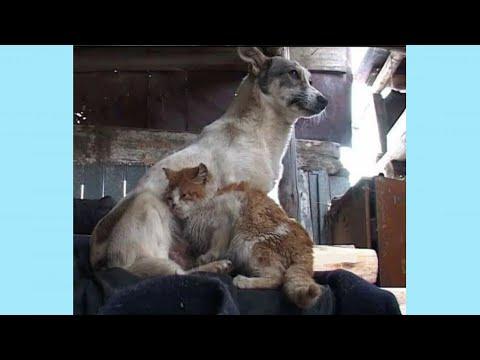 Собака с кошкой три года выживали в заброшенном коровнике, в такое верится с трудом