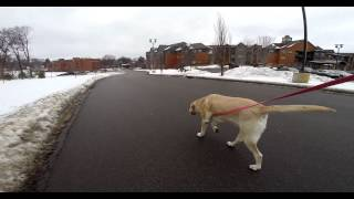 Teaching Your Dog Not To Pull On Leash While Walking | Part 1