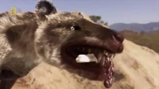 Доисторические хищники — Челюсти как бритва Документальные фильмы National Geographic HD