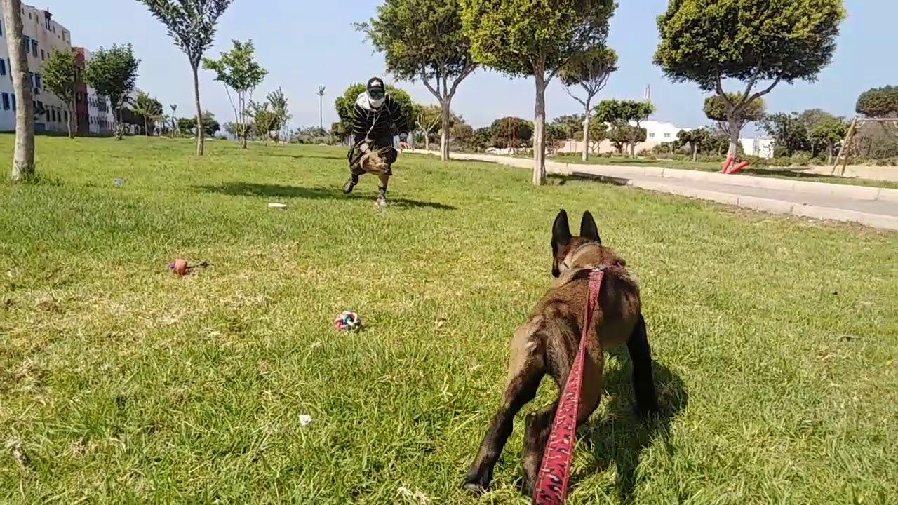 كيفاش تدرب الكلب ديالك يدير البوزون دياله برا ديال البيت