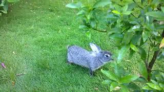 my home garden chittur