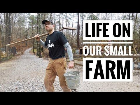 Farm Life - What a Day on Our Small Farm & Homestead is Like -Farm Chores