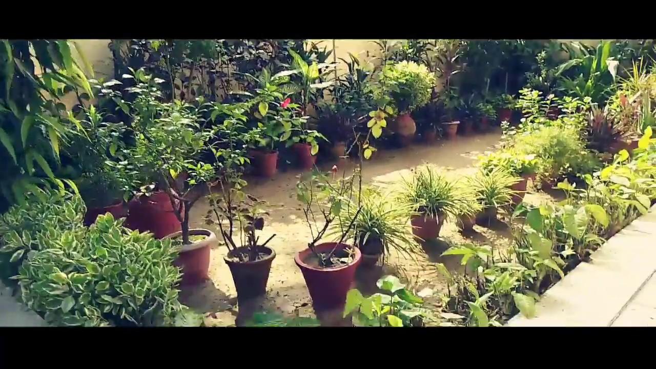 My beautiful garden in india | rooftop garden ideas ...