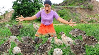Beautiful girl meet quail and catching - Grilled quail bird eating delicious - Life Skills EP 18