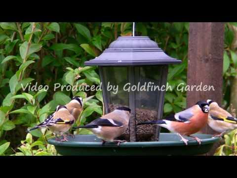 Goldfinch Garden ( 2009 Review )