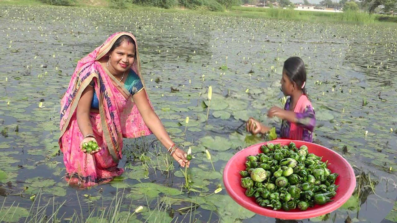 तालाब की सफ़ेद कोकावेली का ऐसा लड्डू  जो नवरात्री व्रत फलाहारी लड्डू  kamal ka Laddu recipe