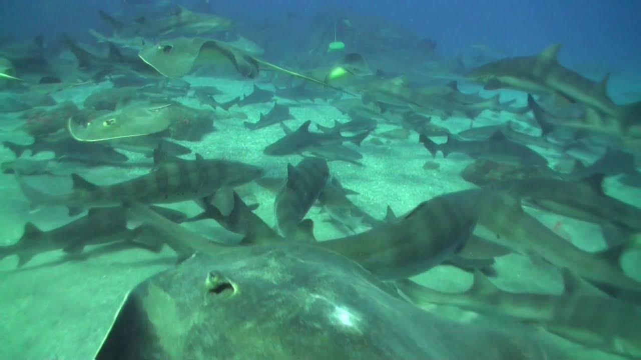 「伊戸 ダイビング」の画像検索結果