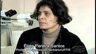 Herbário UPCB (Universidade Federal do Paraná)