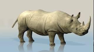 Rhino Носорог