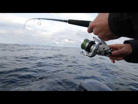 Shimano Ocea Offshore