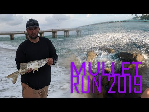 Snook Fishing The Mullet Run 2019