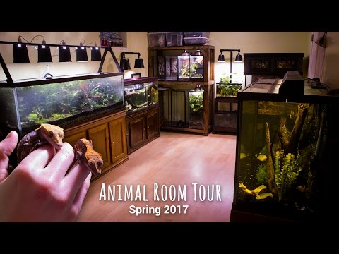 Animal Room Tour - Spring 2017 (Thanks for 40k Subs!)