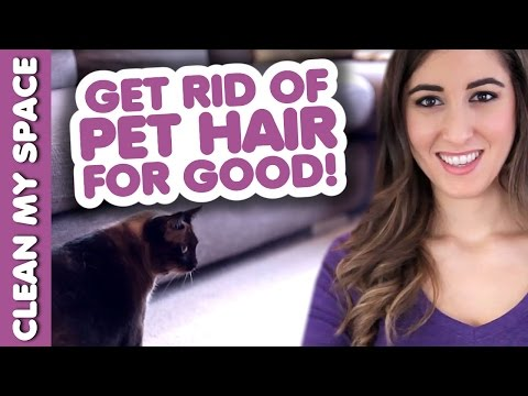 Clean Pet Hair for GOOD! How to Clean Up After Your Pets!