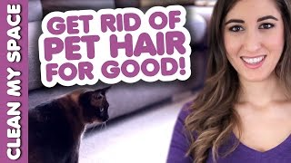 Clean Pet Hair for GOOD! How to Clean Up After Your Pets: Easy Cleaning Ideas (Clean My Space) Thumbnail