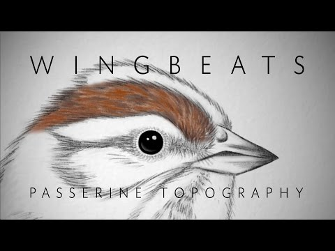 Wingbeats Episode 1 - Passerine Topography