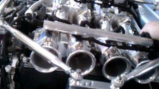 Silverfox Mustang