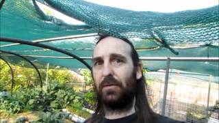Diy Poly Pipe Shade House For Aquaponic Set Up + Ap Update...