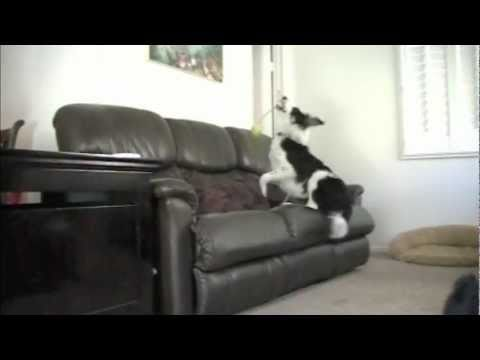 'How to' Stop your Dog from Jumping on the COUCH without Punishment