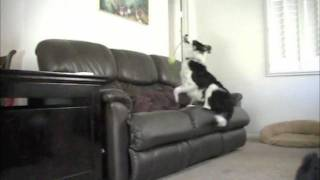 """how To"" Stop Your Dog From Jumping On The Couch Without Punishment"
