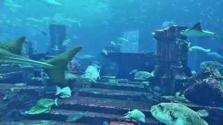 ATLANTIS The Palm Dubai - Aquarium HD  - Relax and Chillout by looking