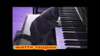 Кошки играют в разные игры  Очень смешно!!!